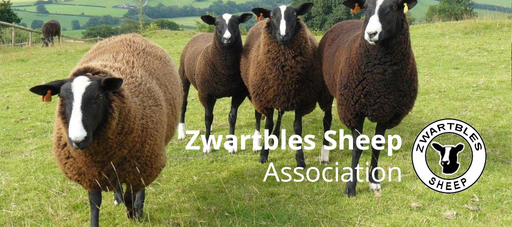 Zwartbles Sheep Assocation, branded clothing available from Showtime Supplies.