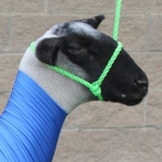 Sullivan's Sheep Rope Halter